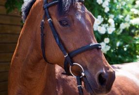 Horseday